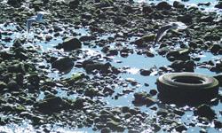 Lixo numa ribeira do Porto