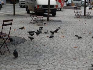 A campanha pede aos munícipes que não alimente pombos, gatos e gaivotas Foto: Rita Silva