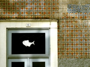 """A cidade onde moro marcou presença no 30º Festival International du Film D'Environnement Foto: """"A cidade onde moro"""""""