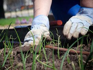 Dados da FAO confirmam que existem crianças entre os 5 e os 7 anos a exercer atividades agrícolas Foto: Arquivo JPN
