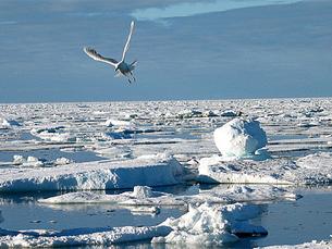 O Árctico é uma das zonas que estará mais ameaçada nas próximas décadas, diz Hélder Spínola Foto: Tunde Pecsvari / Flickr