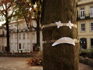 A praça Coronel Pacheco perdeu seis das liquidâmbares que compõem o seu arvoredo Foto: Eduardo Pereira