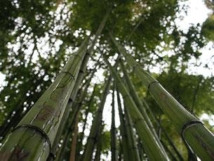 As fibras dos novos cartazes são à base de bambu, soja e milho Foto: Pedro J Pacheco / Flickr