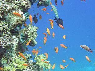 O projecto é focado no mapeamento da biodiversidade marinha em zonas profundas Foto: Sam and Ian/Flickr