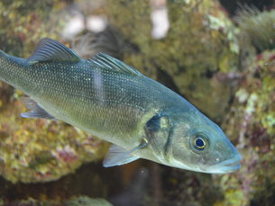 O CIIMAR investiga os ecossistemas presentes no oceano e zonas costeiras Foto: Diogo Fernandes