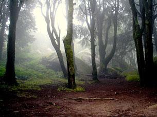A área ardida em Portugal é uma preocupação ambiental da AMI Foto: Hélder Cardoso