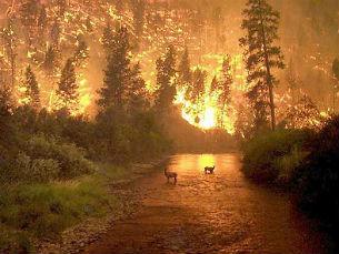 Desempregados e beneficiários do RSI vão executar tarefas para a prevenção de incêndios Foto: Flickr/catherinetodd2
