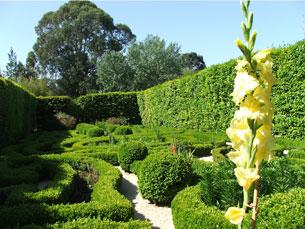 O Jardim Botânico vai receber um busto da poetisa Foto: Fabíola Maciel/Arquivo JPN