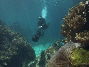 Foram utilizadas câmaras especiais para fotografar debaixo de água Foto: Catlin seaview survey