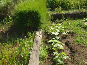 A agricultura permite a ocupação de tempos livres Foto: Teresa Castro Viana