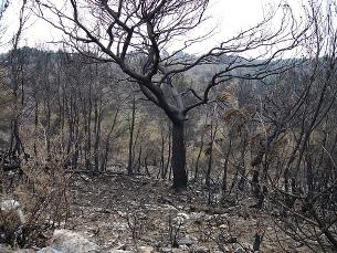 Triplicou o número de hectares de floresta destruída Foto: Luis Perez/Flickr