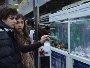 Os aquários com peixes, polvos e anémonas foram algumas das atrações principais Foto: Sara Gonçalves