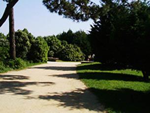 """50 mil metros de espaço do Queimódromo, no Parque da Cidade, vão ser """"ocupados"""" Foto: Arquivo JPN"""