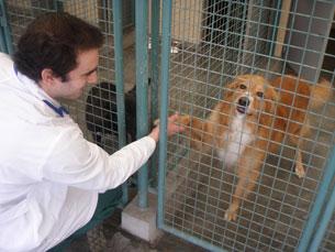 """Os cães têm mais """"inteligência social"""" que lobos ou chipanzés Foto: Arquivo JPN"""