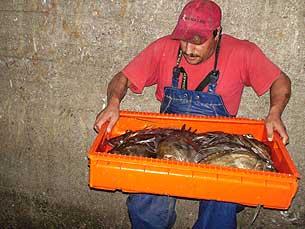 Chegada dos pescadores a terra Fotos: Marisa Ferreira