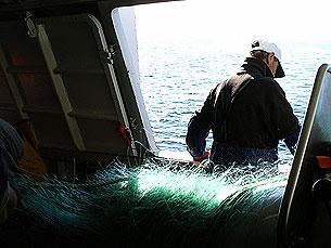 O sector das pescas, em Portugal, enfrenta crise devido a falta de profissionais Foto: Marisa Ferreira/ Arquivo JPN