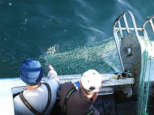 A pesca da lampreia é, neste momento, impedida nas zonas de navegação Foto: Arquivo JPN