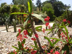 Em Portugal existem oito plantas em vias de extinção Foto: JPR
