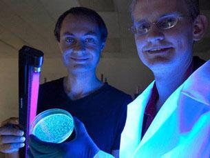 """Esta ideia é de Antony Evans, um empresário da área da tecnologia que dá voz ao projeto """"Glowing Plant"""" Foto: DR"""