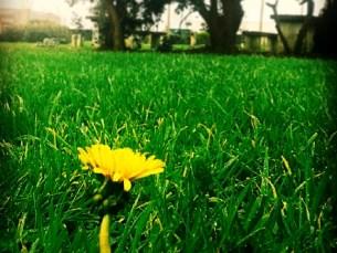 A Primavera, este ano, começou às 16h57 de 20 de março e tem fim previsto para 21 de junho Foto: Tiago Durães Moreira