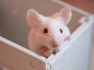 Argumentos contra e a favor da experimentação animal foram debatidos esta quarta