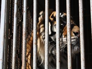 O Circo Mundial apresenta seis espécies de animais no seu espectáculo Foto: Sara Marques Moreira