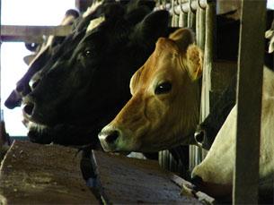 Associações apelam ao consumo de de marcas de leite portuguesas para salvaguardar o futuro do sector Foto: Flickr