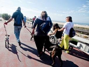 Não ter animais de estimação não é desculpa para não participar nas caminhadas Foto: Sónia Cardoso