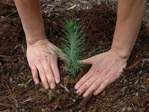 Vão ser plantadas no Viveiro Municipal do Porto 14 espécies nativas da flora da região Foto:  USFS Region 5/Flickr