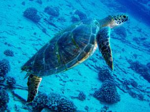 No dia em que se comemora o Dia Mundial da Tartaruga, o JPN foi ao Sealife, no Porto Foto: Nemo's great uncle/FIickr