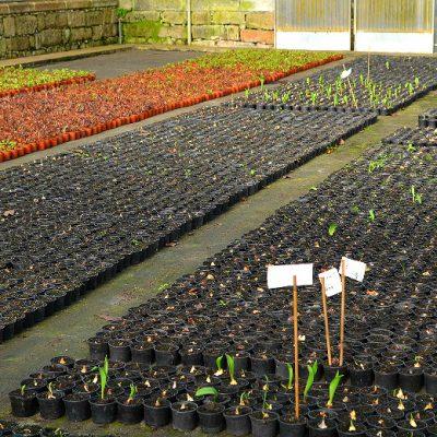 Mais de 63 mil árvores foram já plantadas com a ajuda de voluntários e trabalhadores do Viveiro