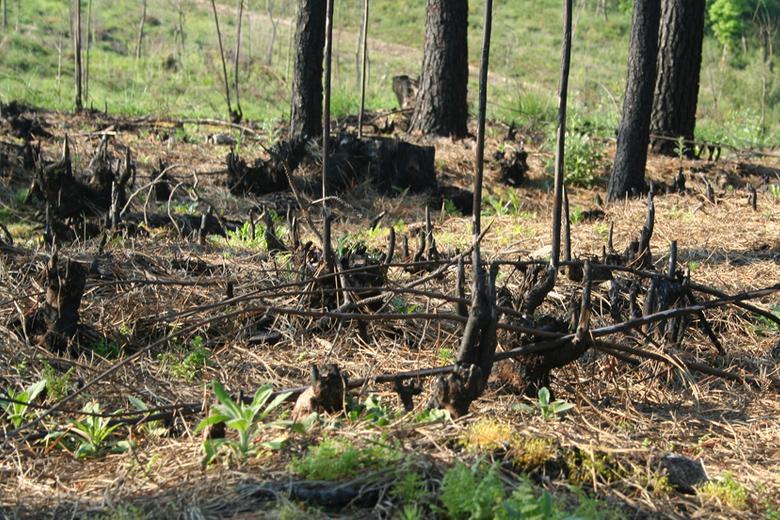 Governo promete adotar medidas que defendam a floresta.