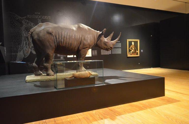 Um rinoceronte, animal que D. Manuel I recebeu de presente, vivo, e que causou grande sensação no país, já que foi o primeiro a ser visto na Europa desde a Antiguidade.