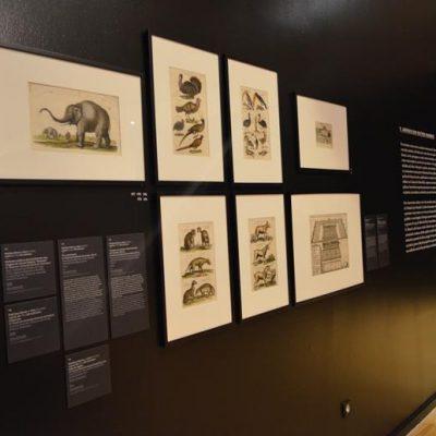 Muitos dos animais exóticos trazidos para Europa tornaram-se atrações centrais dos luxuosos jardins do Renascimento