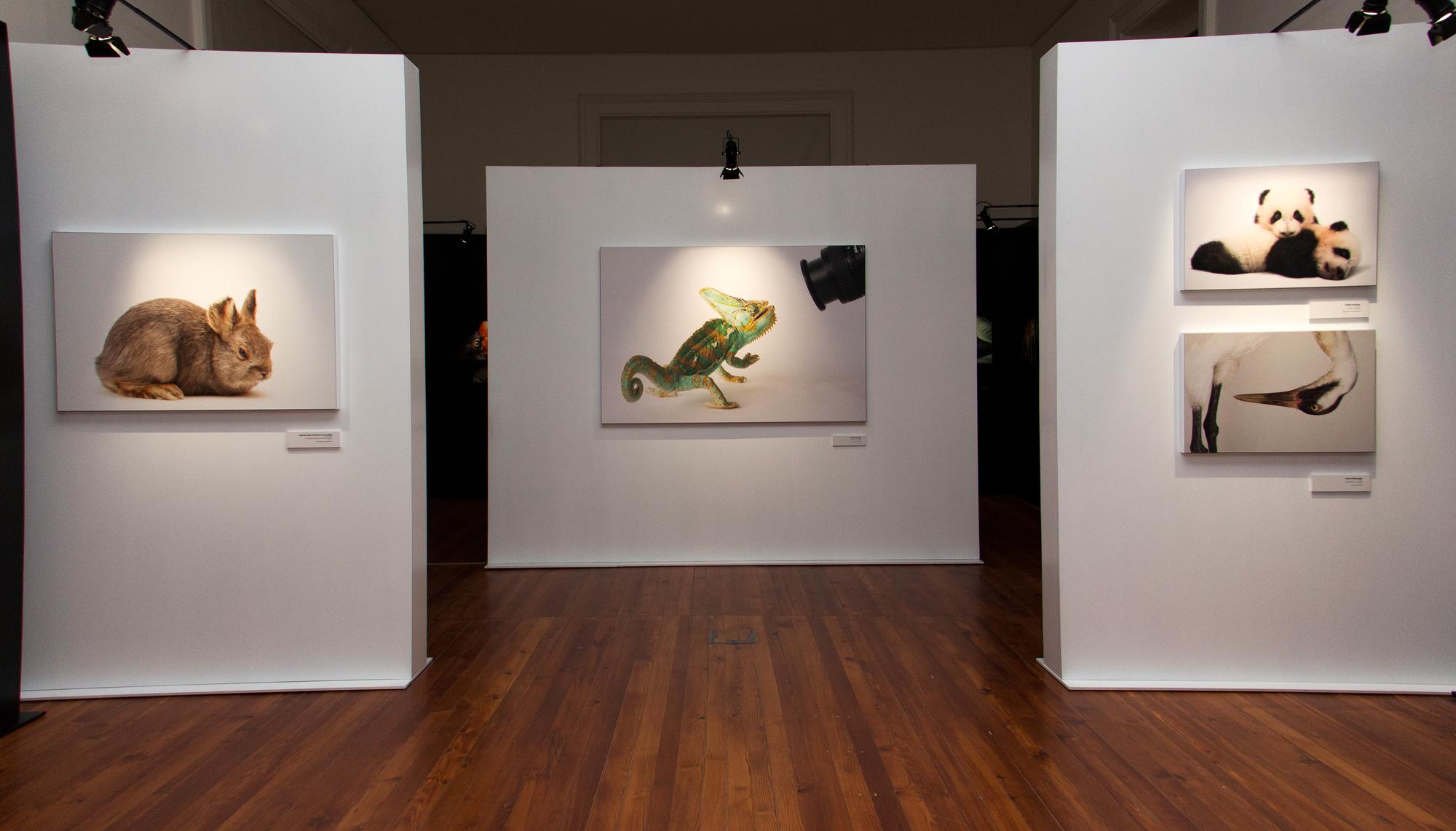 """Exemplos de retratos da mostra """"Photo Ark"""" até abril na Galeria da Biodiversidade."""