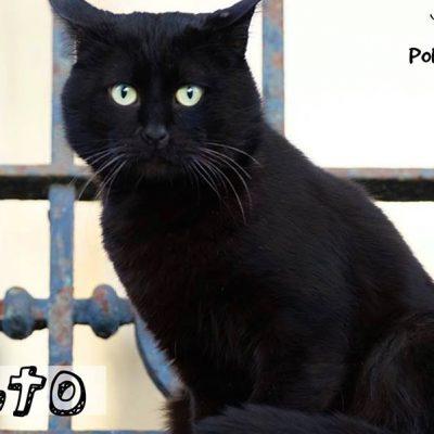 O álbum de fotografias dos gatos para adoção foi lançado no passado sábado, Dia Mundial do Gato.