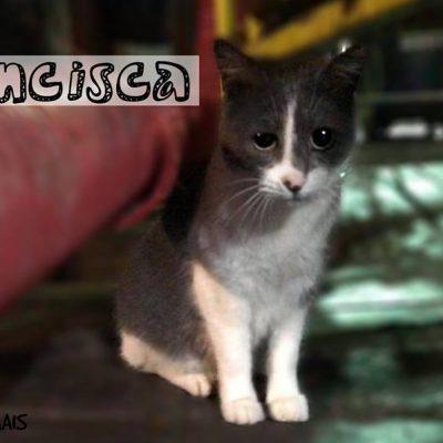Segundo a deputada municipal do PAN, é preciso desenvolver estratégias de atuação para realojar os gatos que vivem num local em obras.