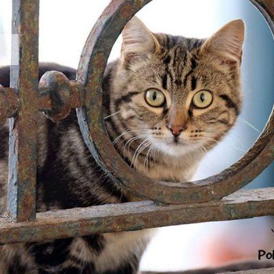 Os gatos são entregues aos novos donos depois de esterilizados.
