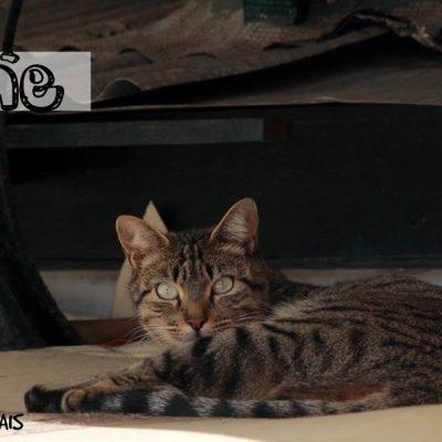 """""""Quem quer adotar um gato do Bolhão"""" espera encontrar um novo lar para todos os gatos que atualmente residem no mercado."""