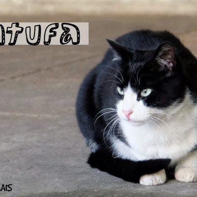 Ainda há dez gatos à procura de um novo dono no mercado do Bolhão.