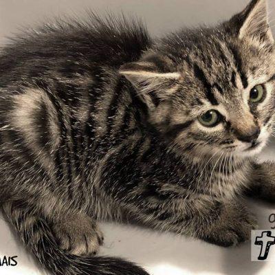 Os gatos bebés foram os primeiros a ser adotados, juntamente com a mãe.