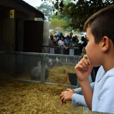 Muitas crianças andaram pela Quinta de Serralves
