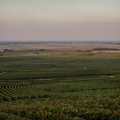 Os campos agrícolas são para muitos, uma fonte de rendimento.