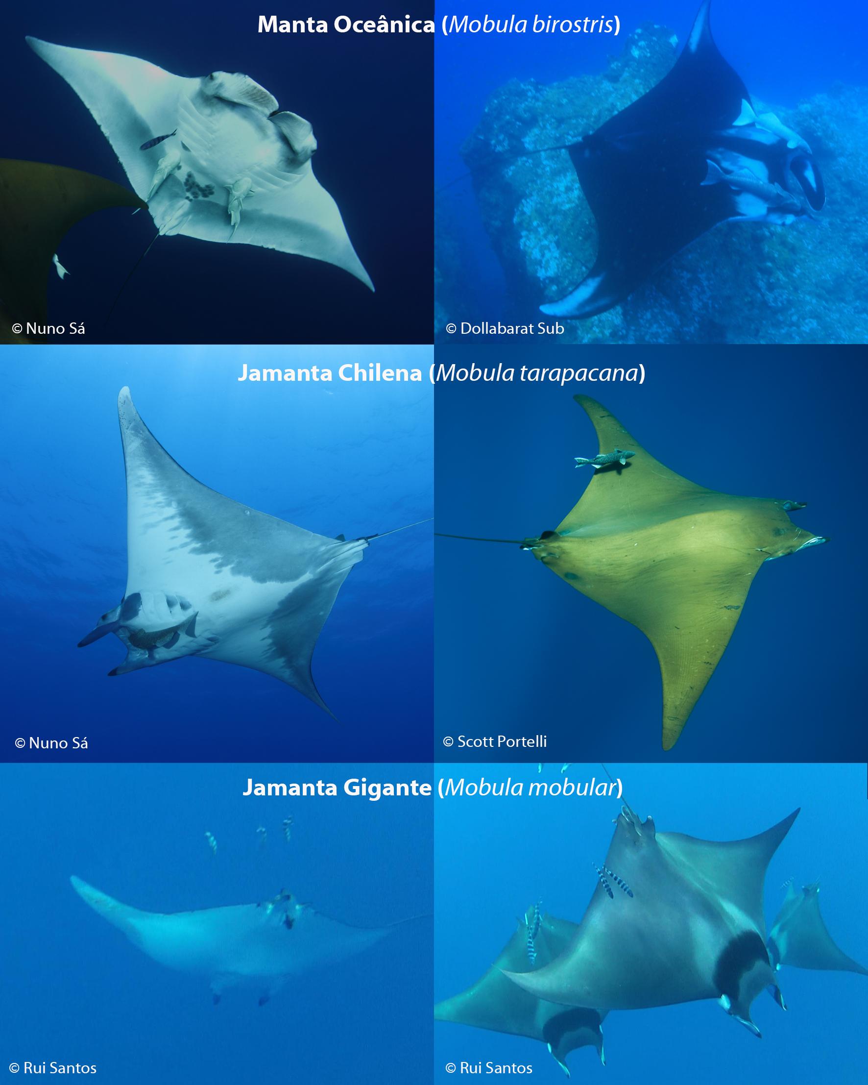 Existem, atualmente, três espécies identificadas