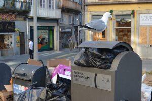 O lixo urbano serve de alimento às gaivotas.