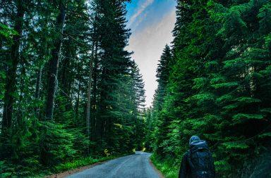 Um líder de viagens distingue-se de um guia turístico em vários aspetos.